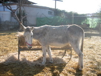 Mocarra_nerja_donkey_sanctuary_feed
