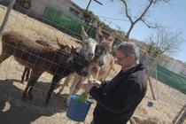 Vartan_friends_the_nerja_donkey_san